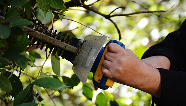 Implantation et taille des arbres et haies