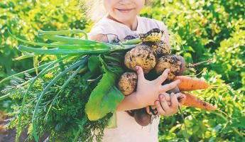 Le projet alimentaire de territoire, la qualité alimentaire pour toutes et tous