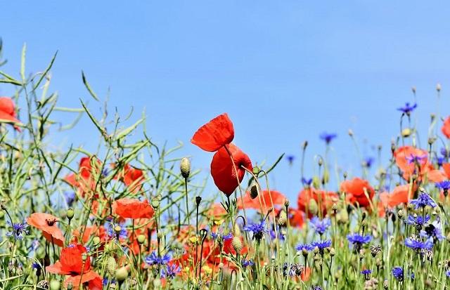 Eco-geste du mois, les bons gestes pour entretenir son jardin