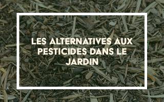 Les alternatives aux pesticides dans le jardin