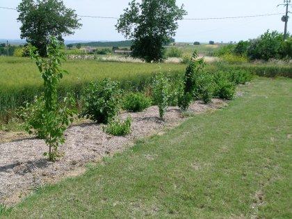 Programme Plant'Arbre pour réussir son projet de plantation