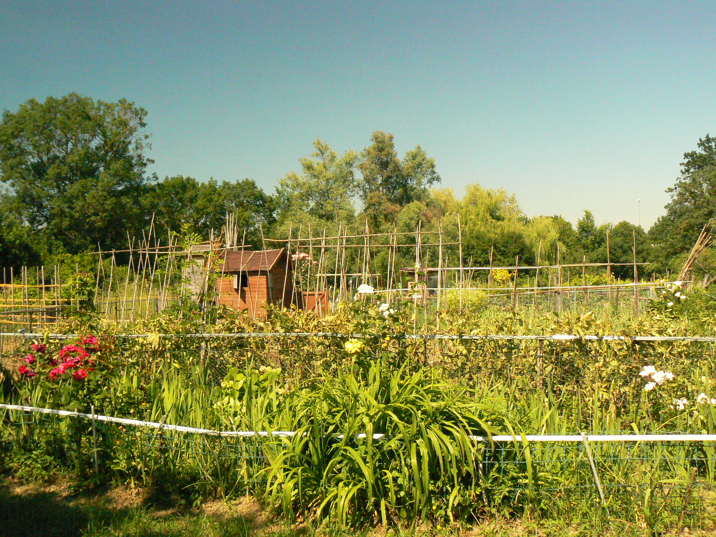 Jardins familiaux : accès en période de confinement